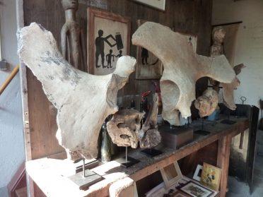 Fossiel heupstuk mammoet