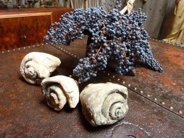 Fossiele schelpen + palmbes