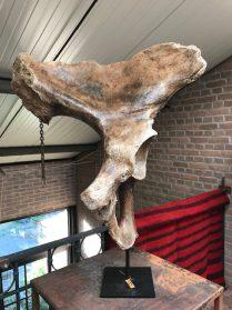 Mammoet heupstuk fossiel